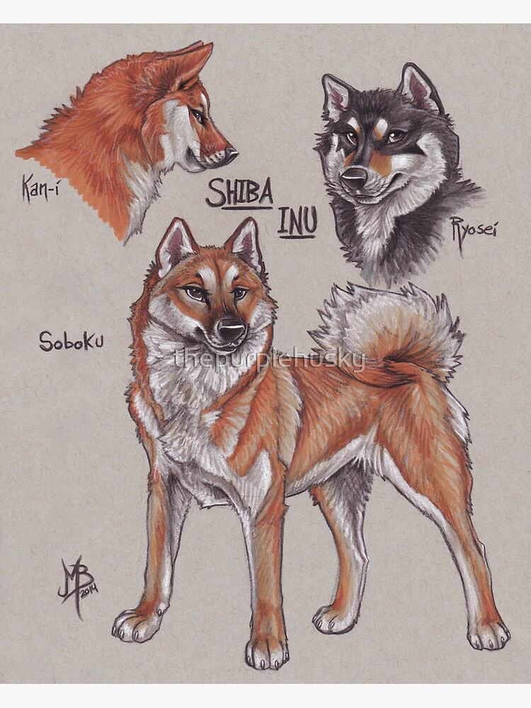 Shiba Inu by thepurplehusky