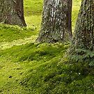 Japan, Kyoto, Moss garden. by johnrf