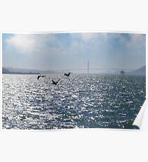San Francisco Pelican Bay Poster