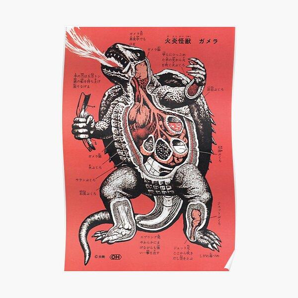 Gamera Anatomy Poster