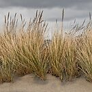 Sea Grass and Sand by Jeff Goulden