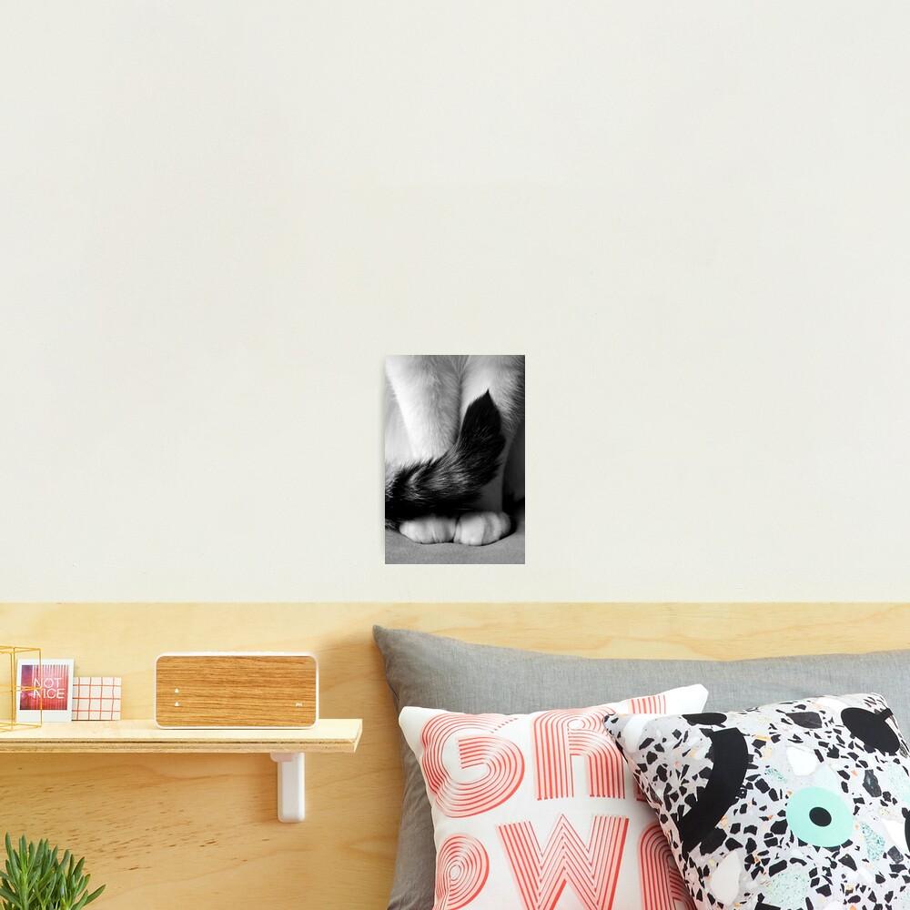Sitting Pretty Photographic Print