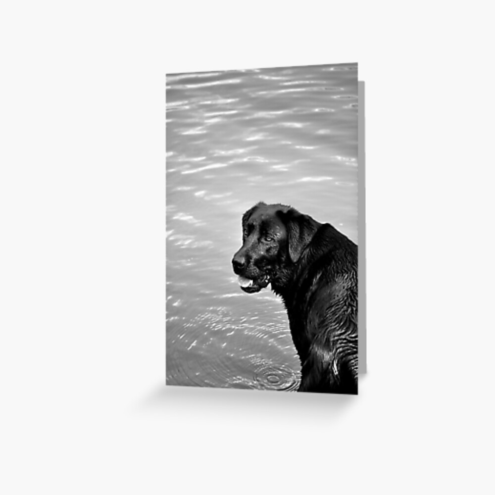 throw the stick, throw the stick...! Greeting Card