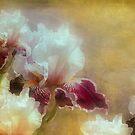 Hoods canal iris by Jeff Burgess