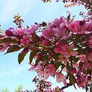 Cherry Blossom  Branch by Braedene