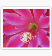 Pink and Red Epiphyllum Sticker