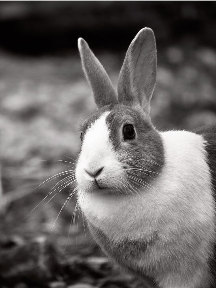 Bunny Buddies by InspiraImage