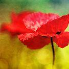 Adorable Poppies... by Bob Daalder