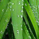 First Rain by Sauveur