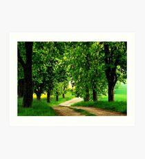 Walking under chestnut trees Art Print