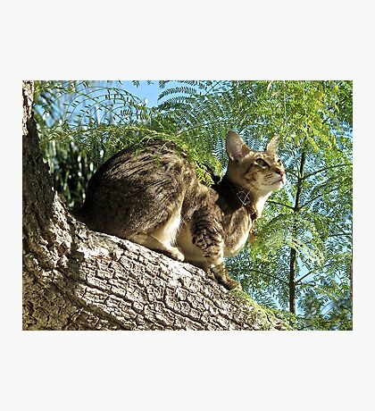 Rollo up a Tree Photographic Print