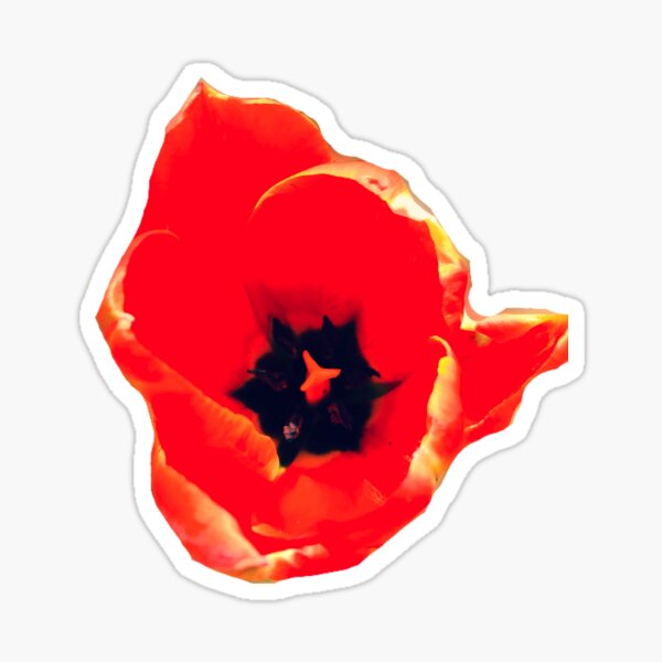 Red Tulip Blooming Sticker