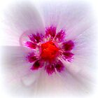 Vinca Rosea Closeup von ©The Creative  Minds
