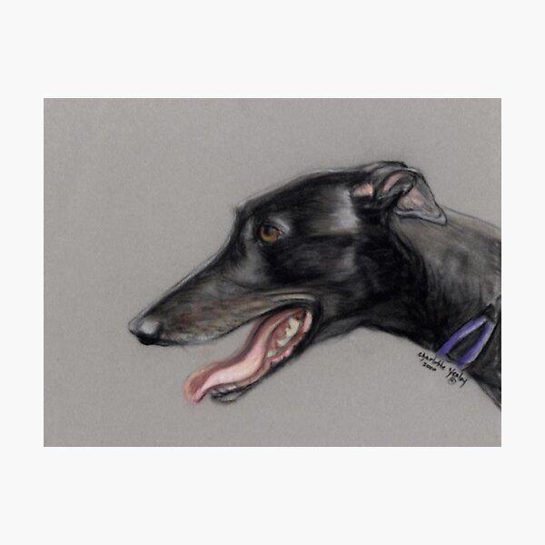 Black Greyhound Profile Photographic Print