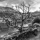 Old Tree at Rydal Water by Reg-K-Atkinson