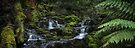 Quaille Cascades by Mieke Boynton