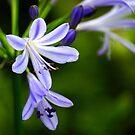 Spring awakening.. by FotoBloke