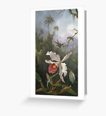 Martin Johnson Heade - Two Hummingbirds Above A White Orchid. Still life with flowers: hummingbird, nest, orchid,  lotus blossom, wonderful flower, forest, passion garden, magnolias Greeting Card