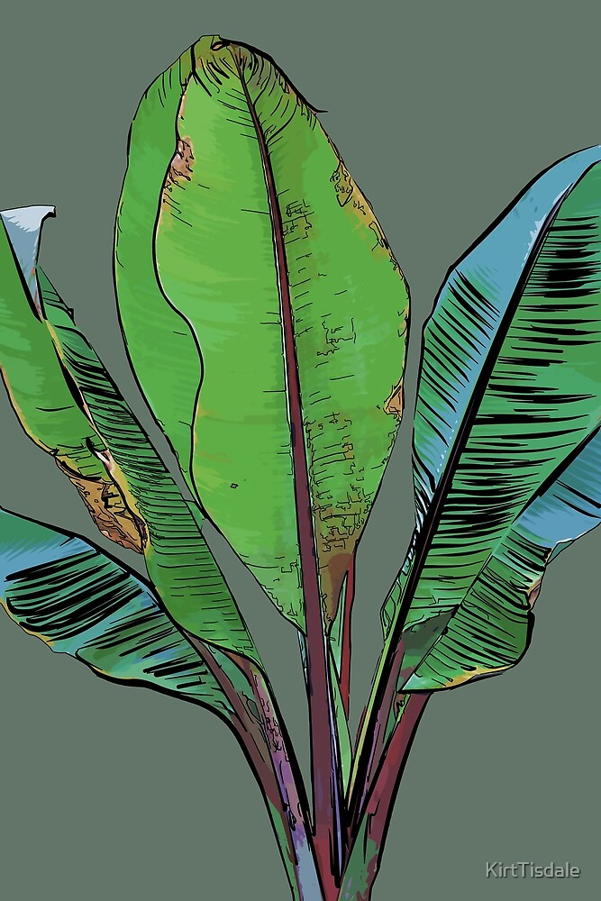Banana Plant by KirtTisdale