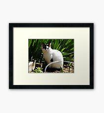 Cat Portrait, Brunswick Community Garden, Jersey City, New Jersey  Framed Print