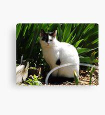 Cat Portrait, Brunswick Community Garden, Jersey City, New Jersey  Canvas Print