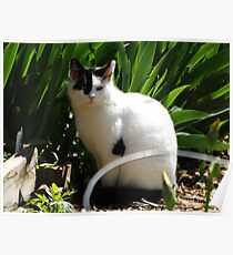 Cat Portrait, Brunswick Community Garden, Jersey City, New Jersey  Poster