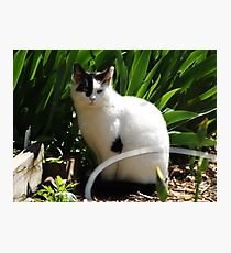 Cat Portrait, Brunswick Community Garden, Jersey City, New Jersey  Photographic Print