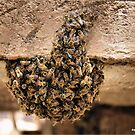 MOVING SWARM OF BEE'S by Magriet Meintjes