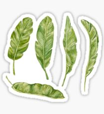 banana leaves Sticker