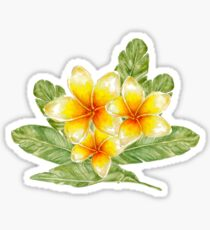 Plumeria flowers and banana leaves  Sticker