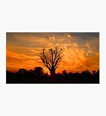 Tranquil Sunset Boab - Panorama Photographic Print