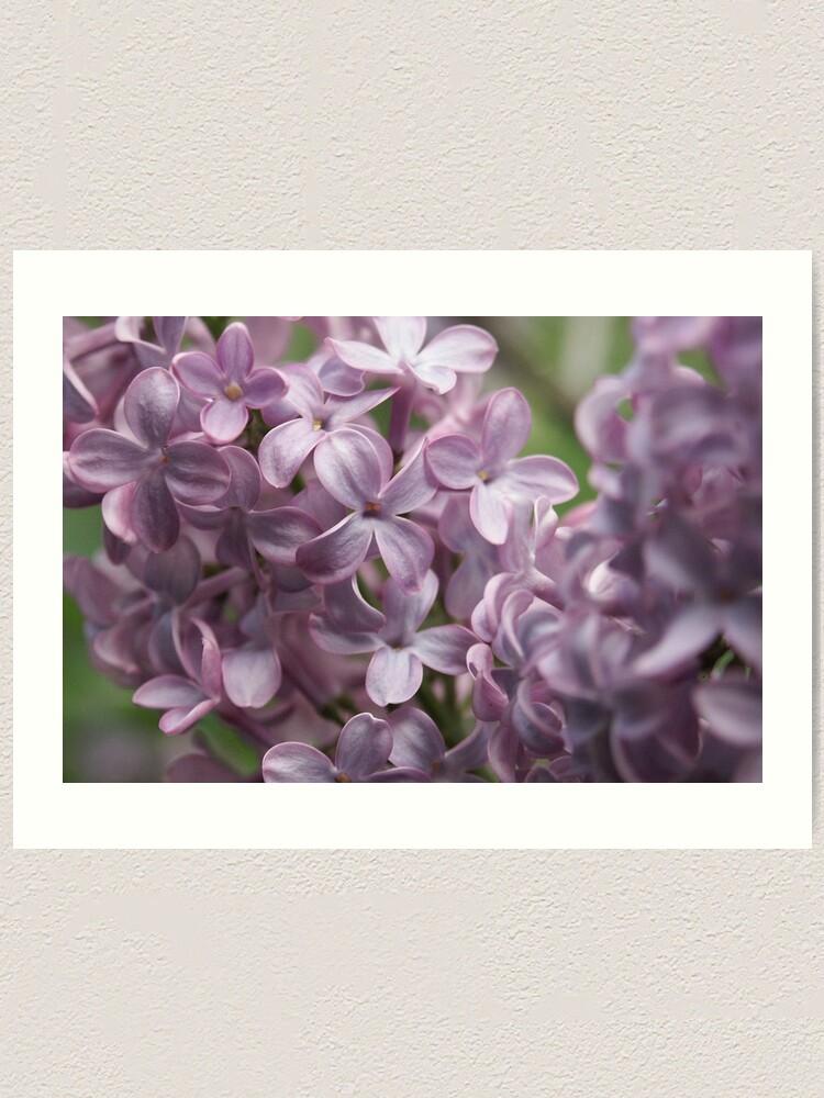 Alternate view of Lilac Art Print