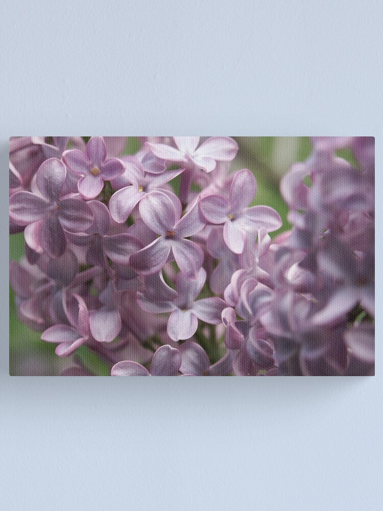 Alternate view of Lilac Canvas Print