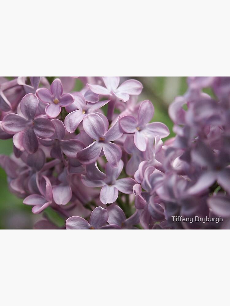 Lilac by Tiffany
