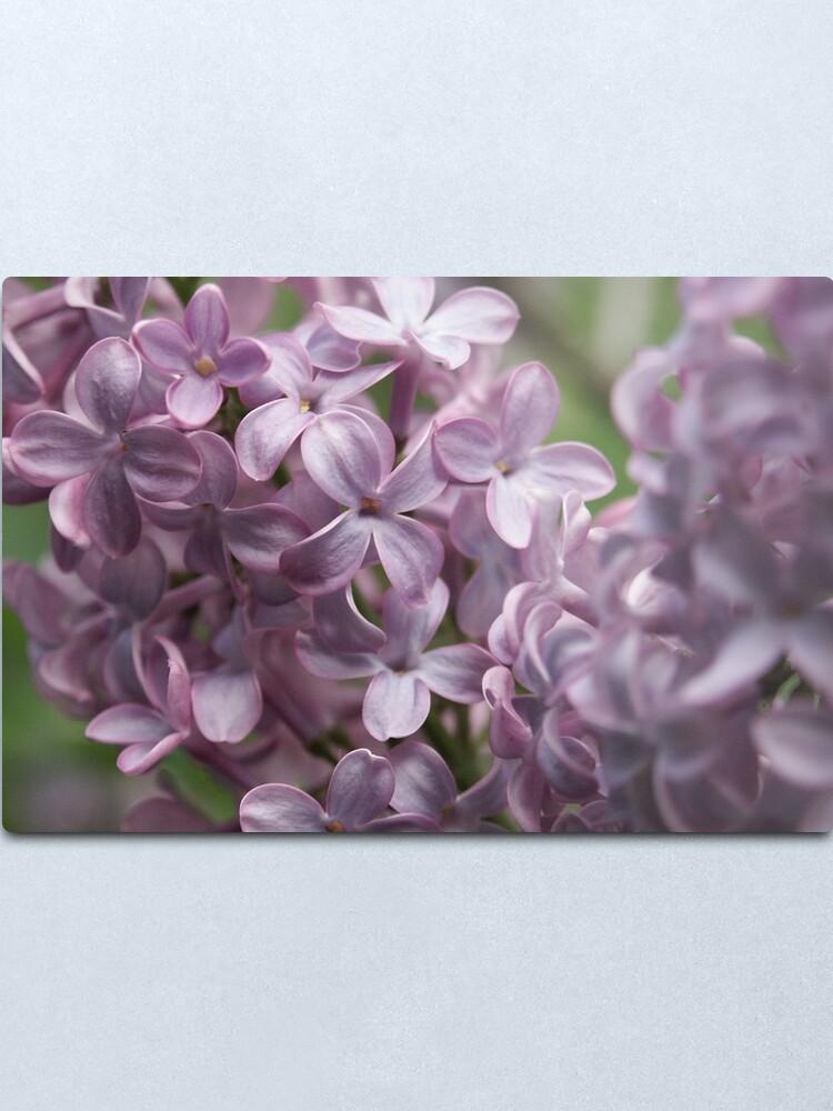 Alternate view of Lilac Metal Print