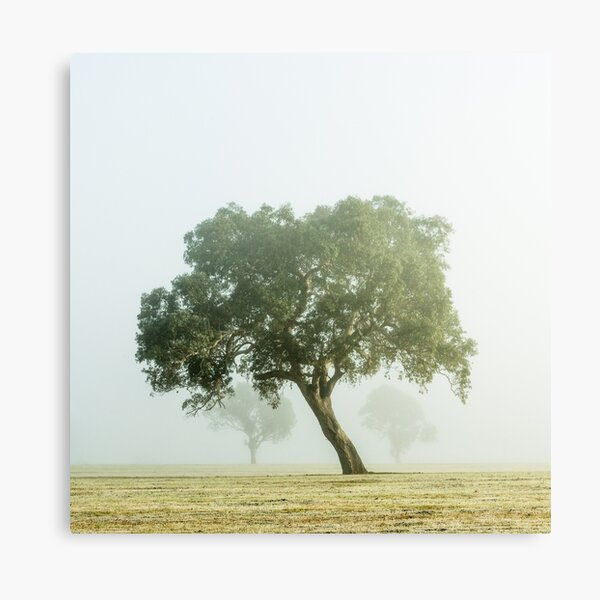 Near Mansfield there leans a tree. Canvas Print