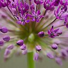 purple by Nicole W.