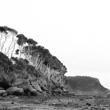 Fossil Bluff - Tasmania by muffy79