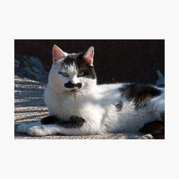 Kitty of Krk Photographic Print