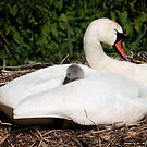 Keeping Snug by Irene  Burdell
