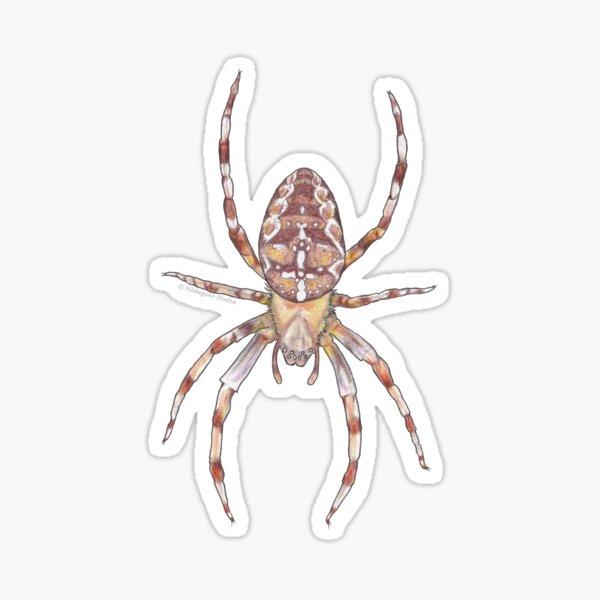 Common Garden Spider Sticker