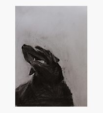 Black and white drawing, Labrador Retriever Photographic Print