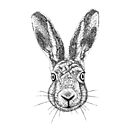 Hare Portrait Ink Drawing by Nigel Tinlin