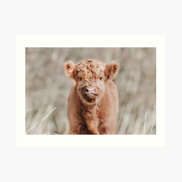 Scottish Highland Cow Baby Calf Art Print
