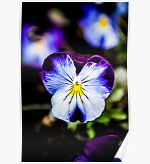 Blue and Purple Pansy Pants Poster