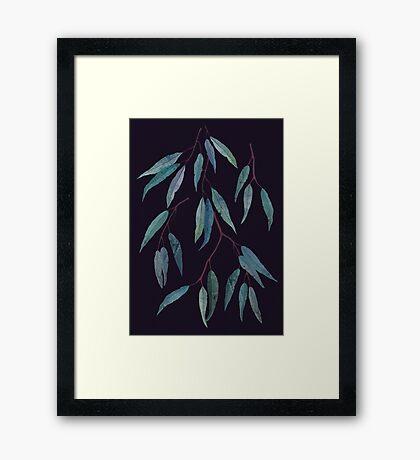 Eucalyptus leaves Framed Print