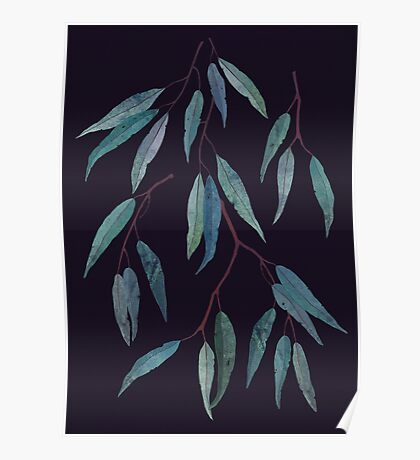 Eucalyptus leaves Poster