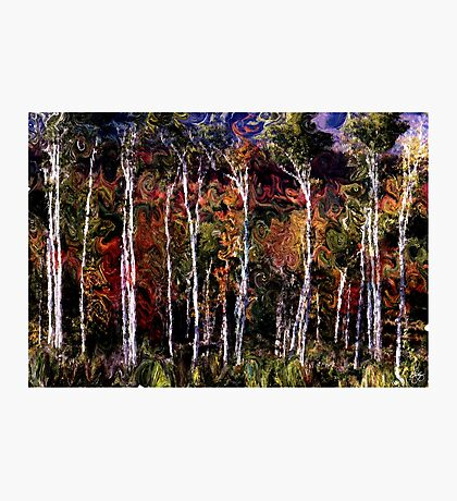 Wind in the Birches Photographic Print