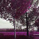 Crimson Land by Anivad - Davina Nicholas