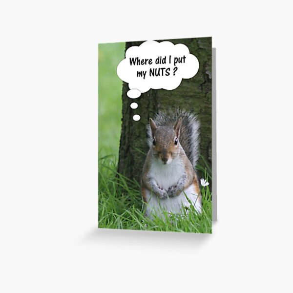 Squirrel - where are my nuts? Greeting Card